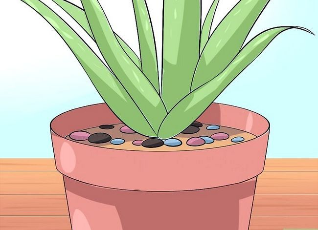 Titel afbeelding Care for Your Aloe Vera Plant Step 8