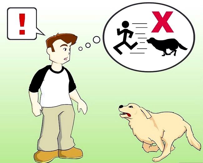 Titel afbeelding Stay Safe when a Dog Approaches You Stap 1