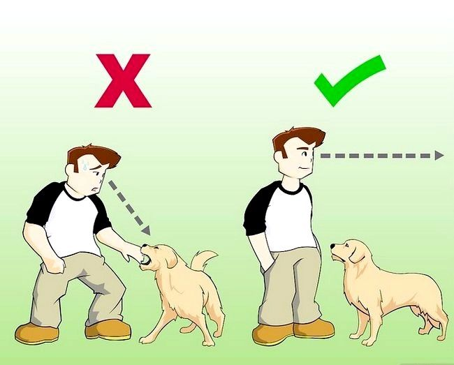 Titel afbeelding Stay Safe when a Dog Approaches You Step 2