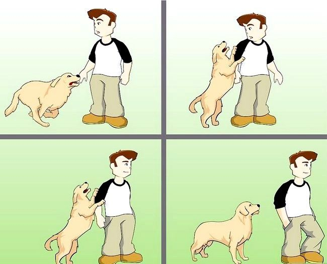 Titel afbeelding Stay Safe when a Dog Approaches Step 3