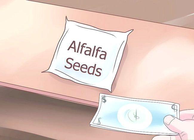 Titel afbeelding Grow Alfalfa Sprouts Step 1