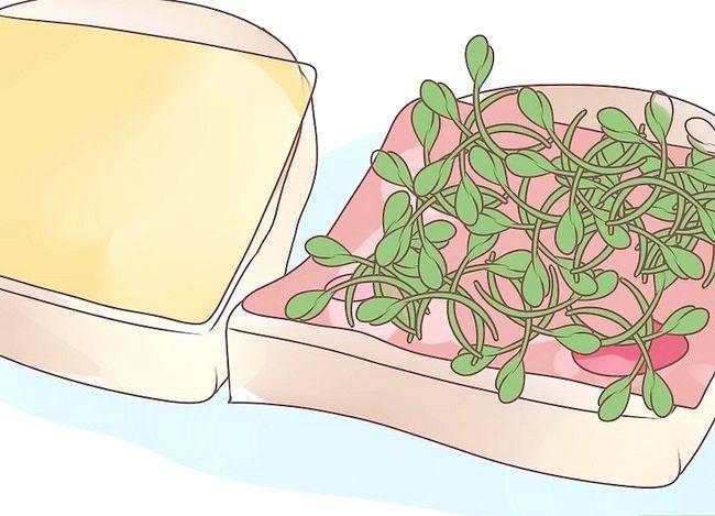 Titel afbeelding Grow Alfalfa Sprouts Step 21