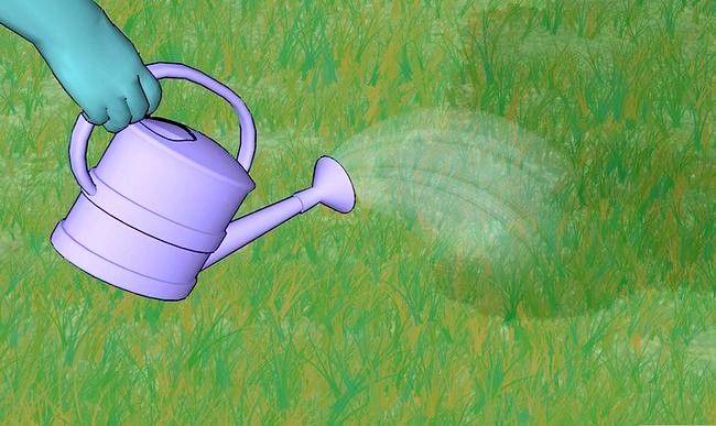 Titel afbeelding Grow Grass Step 11