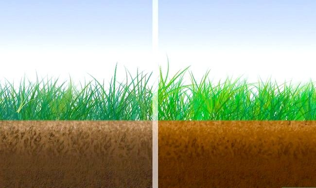 Titel afbeelding Grow Grass Step 2