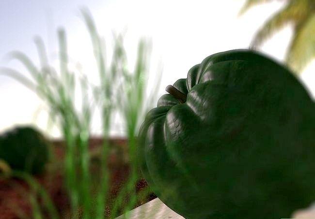 Titel afbeelding Grow Acorn Squash Step 16
