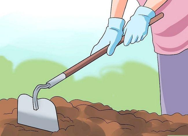 Titel afbeelding Grow a Bean Plant Step 7