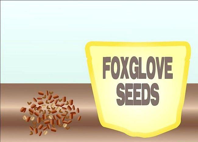 Titel afbeelding Grow Foxglove Step 1