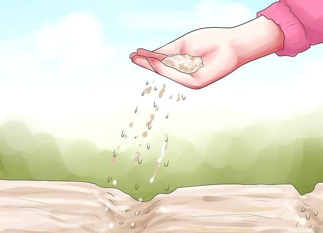 Titel afbeelding Grow Dichondra Step 16