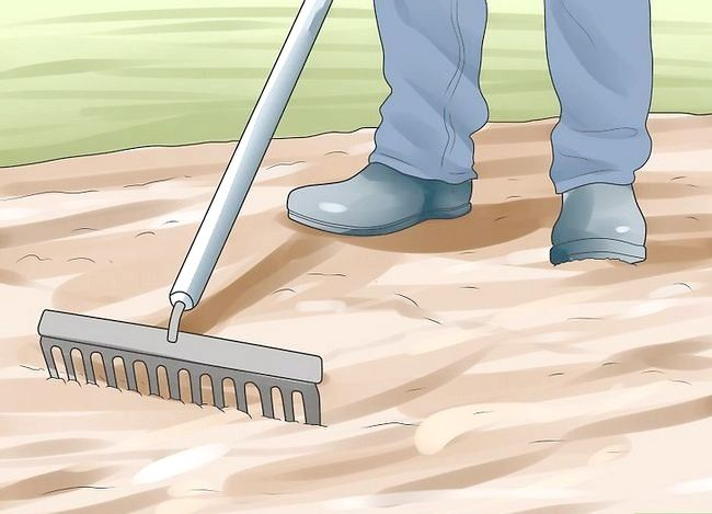 Titel afbeelding Grow Dichondra Step 17