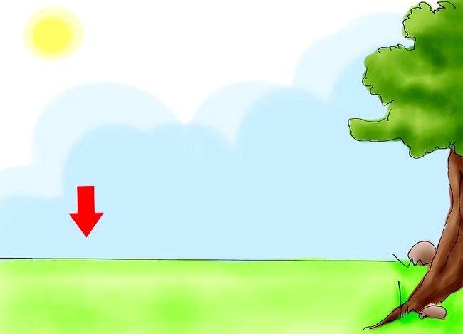 Hoe granaatappels te kweken