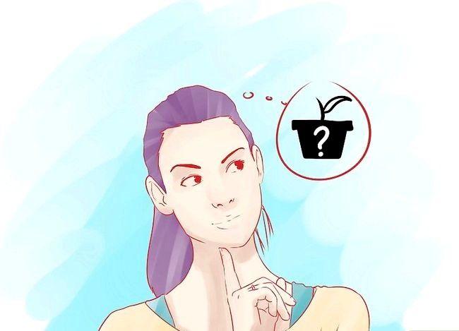 Hoe aromatische kruiden te kweken