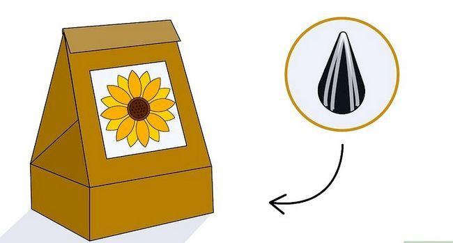 Titel afbeelding Grow a Sunflower in a Pot Stap 1
