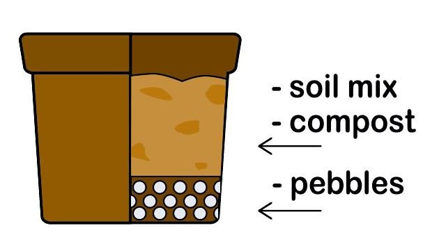 Titel afbeelding Grow a Sunflower in a Pot Step 3