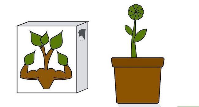 Titel afbeelding Grow a Sunflower in a Pot Step 11