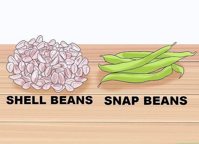 Titel afbeelding Grow a Bean Plant Step 1