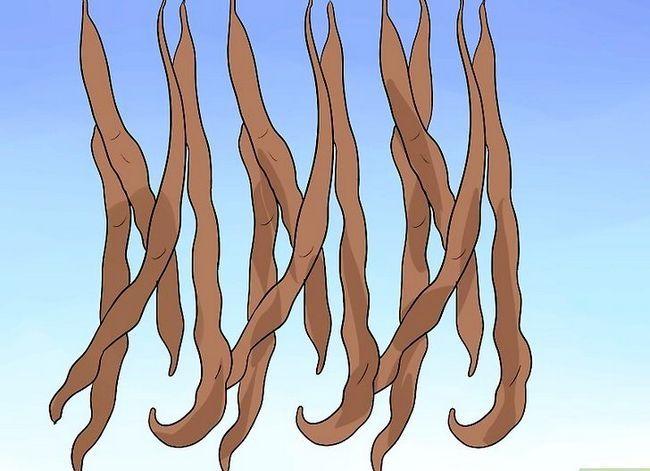 Titel afbeelding Grow a Bean Plant Step 15