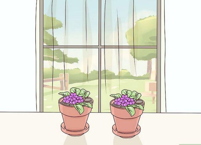 Titel afbeelding Grow African Violets Step 11