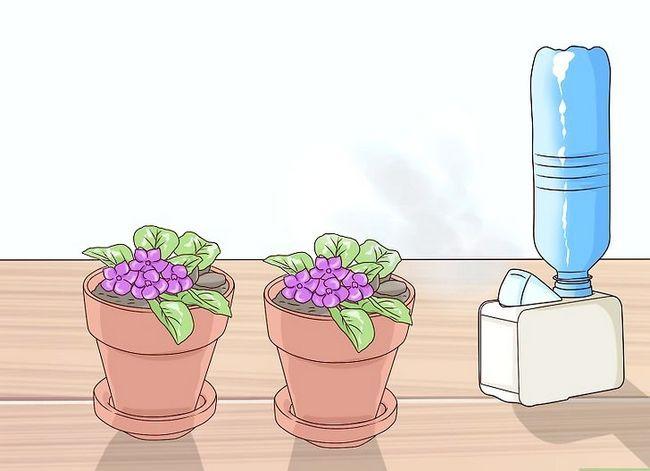 Titel afbeelding Grow African Violets Step 14
