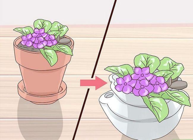 Titel afbeelding Grow African Violets Step 15