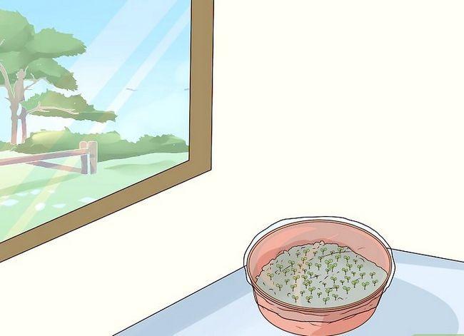 Titel afbeelding Grow African Violets Step 3