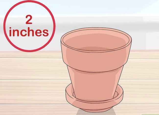 Titel afbeelding Grow African Violets Step 6