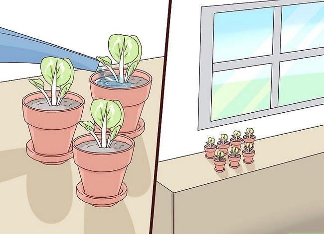 Titel afbeelding Grow African Violets Step 9