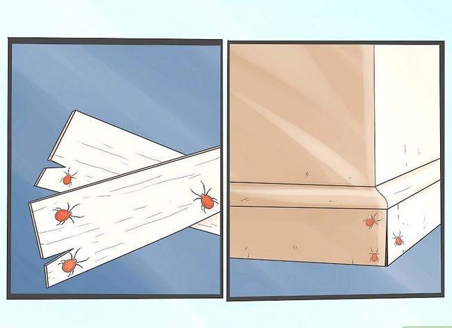 Titel afbeelding Get Rid of Clover Mites Step 1