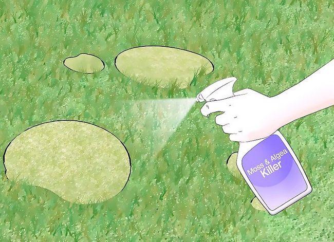 Titel afbeelding Get Rid of Moss in je gazon Stap 4