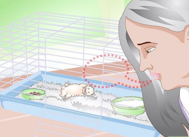 Titel afbeelding Wake up Your Hamster Without Scaring It Step 1