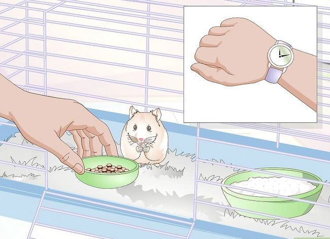 Titel afbeelding Wake up Your Hamster Without Scaring It Step 13