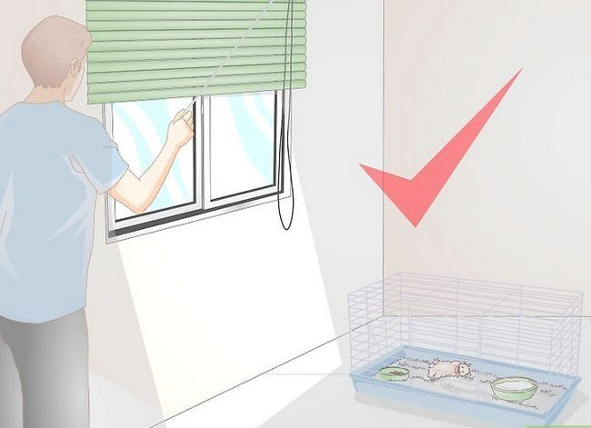 Titel afbeelding Wake up Your Hamster Without Scaring It Step 6