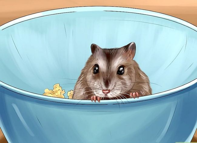 Titel afbeelding Sex a Hamster Step 2