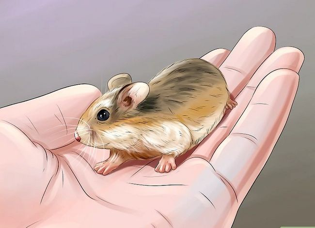Titel afbeelding Sex a Hamster Step 5