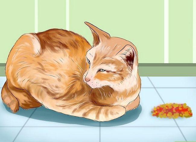 Titel afbeelding Diagnose and Treat knaagdierzweren bij katten Stap 2
