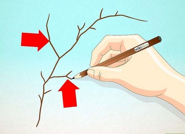 Afbeelding met de titel Draw Leaves Step 11