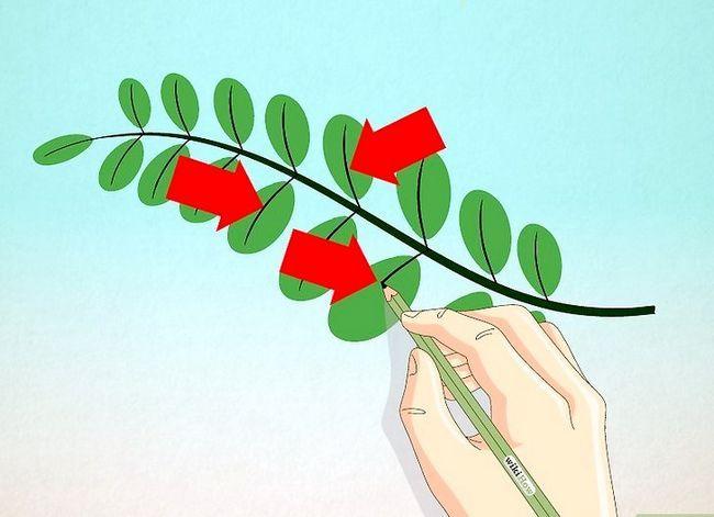 Titel afbeelding Draw Leaves Step 6