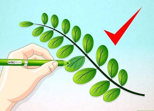 Afbeelding met de titel Draw Leaves Step 9