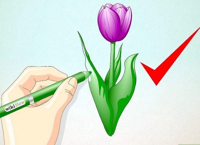 Titel afbeelding Draw a Tulip Step 5