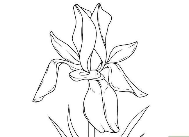 Titel afbeelding Draw Flowers Step 36
