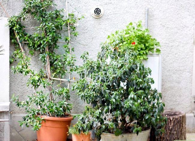 Titel afbeelding Design an Exotic Garden Step 1