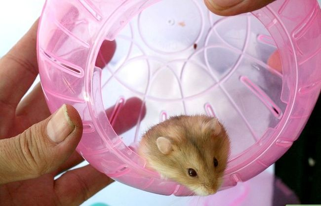 Titel afbeelding Have Fun With Your Hamster Step 2