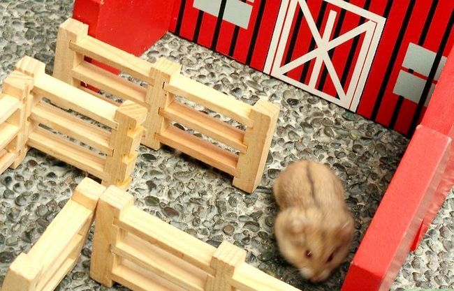Titel afbeelding Have Fun With Your Hamster Step 7
