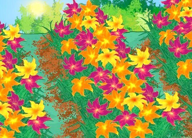 Titel afbeelding Divide Daylilies Step 9
