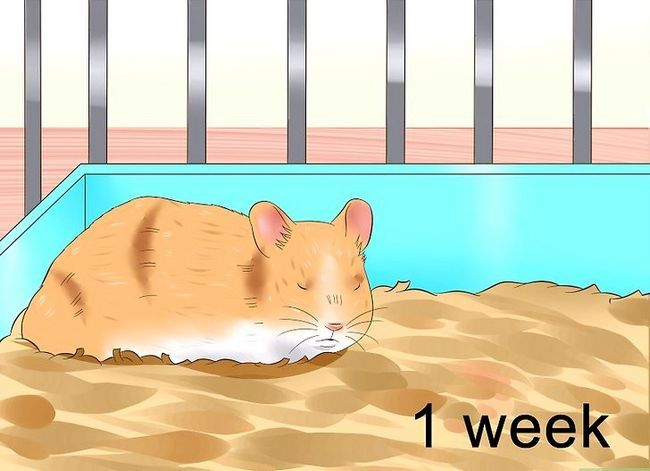 Titel afbeelding Tame a Hamster Step 3
