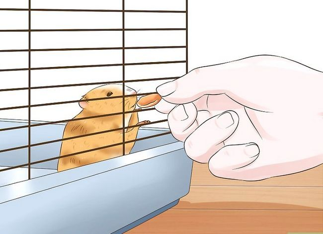 Titel afbeelding Tame a Hamster Step 5