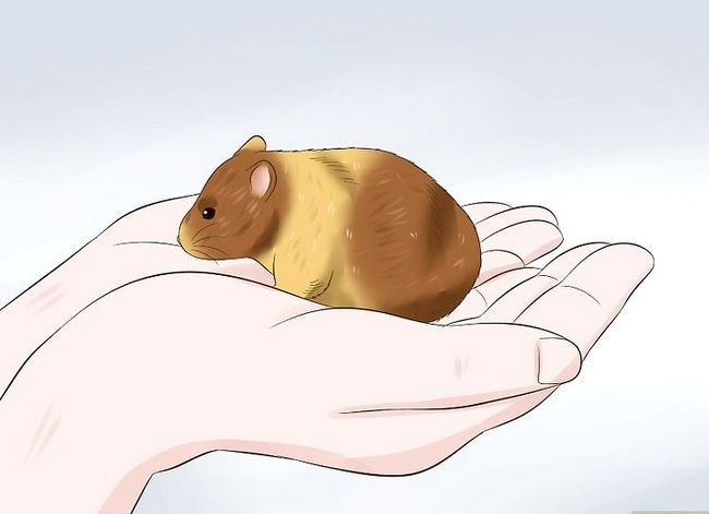 Titel afbeelding Tame a Hamster Step 8