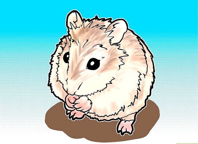 Titel afbeelding Tame a Roborovski Hamster Step 1