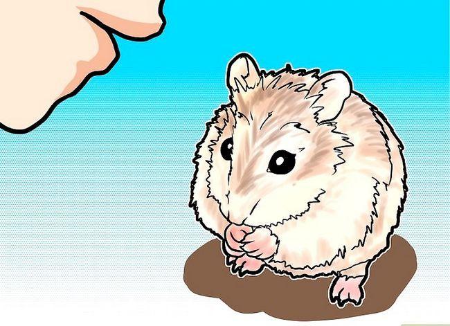 Titel afbeelding Tame a Roborovski Hamster Step 2