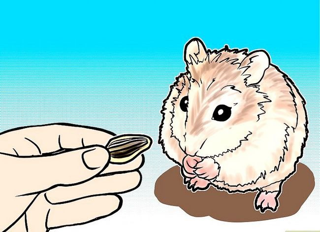 Titel afbeelding Tame a Roborovski Hamster Step 3