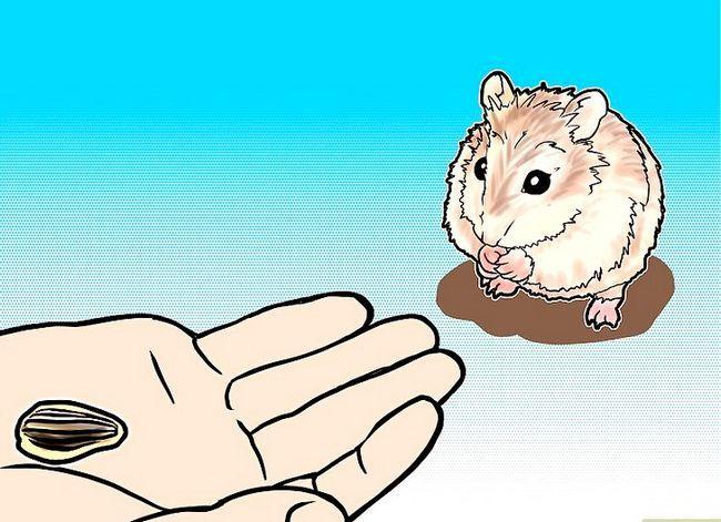 Titel afbeelding Tame a Roborovski Hamster Step 4